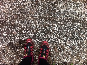 Es regnet Blütenblätter