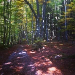 starnberg-trail